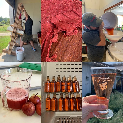 photos of our assistant cidermaker pressing red-fleshed apples