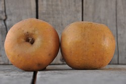 Apples - Ashmead's Kernel