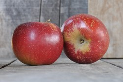Apples - Black Twig